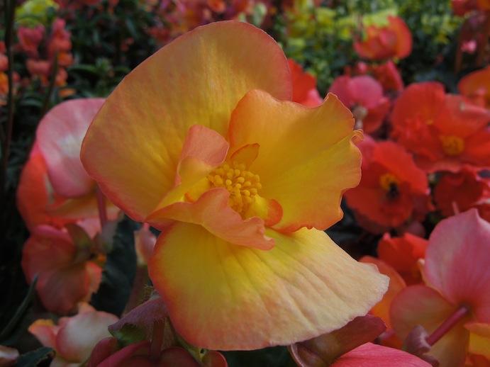 Flower - Kodiak, AK