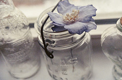 Mason Jar with Flower - CC  Anna Gearhart