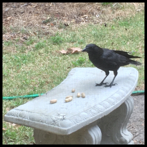 Crow on a Stone Bench