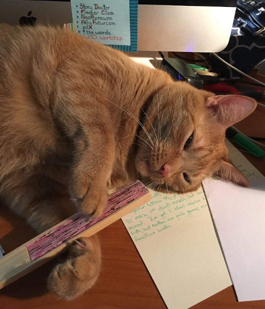 Flynn, a large orange tabby, lying on a half-written letter with a paper fan between his paws.