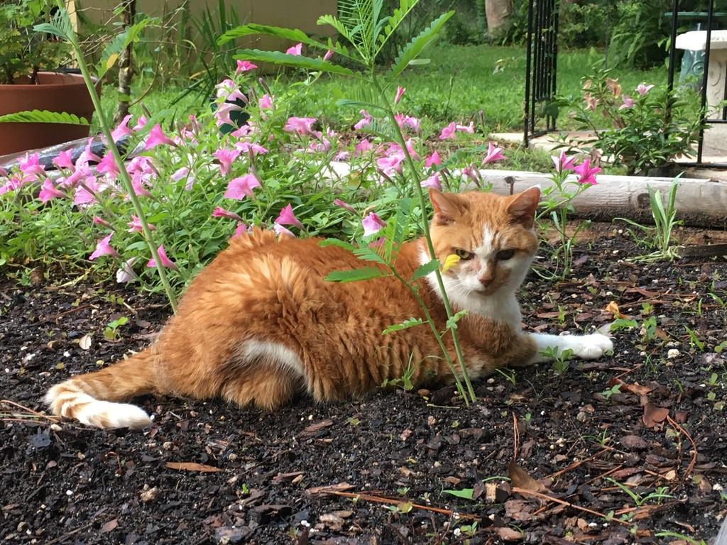 Emma in the Garden